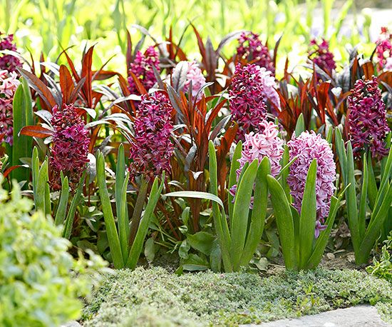 8 best flores dalias images on pinterest bulb bulbs and lamps design idea layer perennial bulbs for a dramatic show of spring flowering bulbs plant smaller perennial species such as crocus or scilla over bigger mightylinksfo