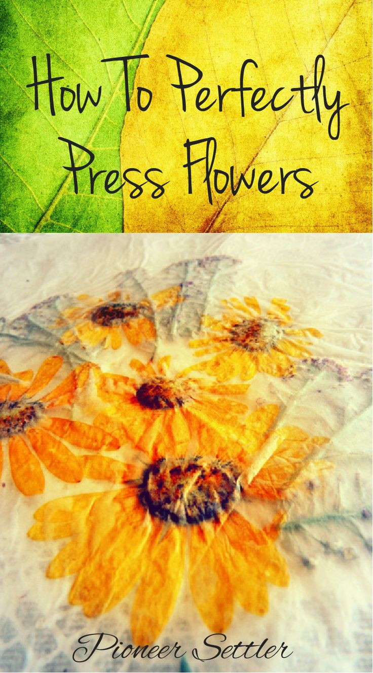 How To Perfectly Press Flowers | Learn how to save your colorful flowers by drying or pressing them. Great for crafts, decoration or even gifts! #pioneersettler