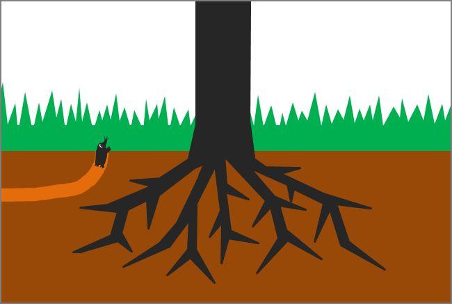 巨木はどうして巨木になることができたのだろうか?  巨木になり得る樹種であったということももちろん…
