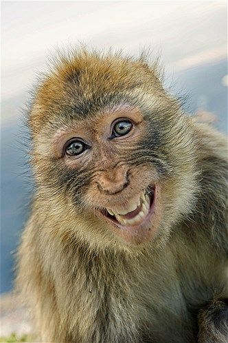 Imagem: 'Sorridentes', eles surpreenderam os fotógrafos (© Holger Leue/Lonely Planet/Caters News)