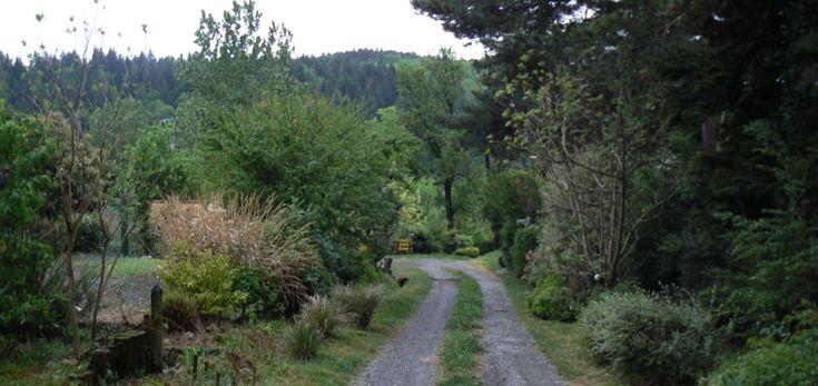 Pépinières de Lavergne : à Noailhac, non loin de Castres (Tarn) : arbustes rares et exceptionnels. A voir absolument.