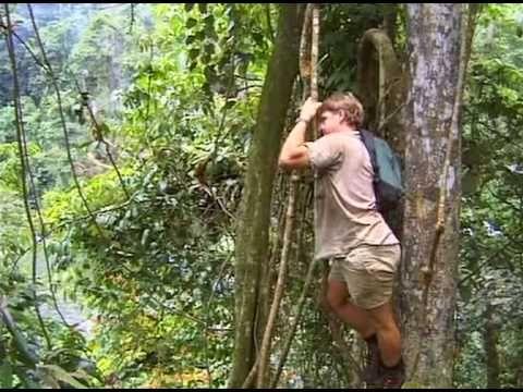 Teenage Daughter of Crocodile Hunter Steve Irwin in Bizarre Spat     StephanieRobicheau com