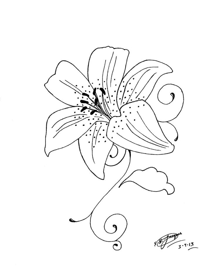 Lily Tattoo Line Drawing : Best tiger lily tattoo drawings images on pinterest