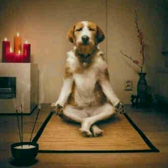 Meditating dog, myhealingpath meditation animals pets healing anxious peace love yoga
