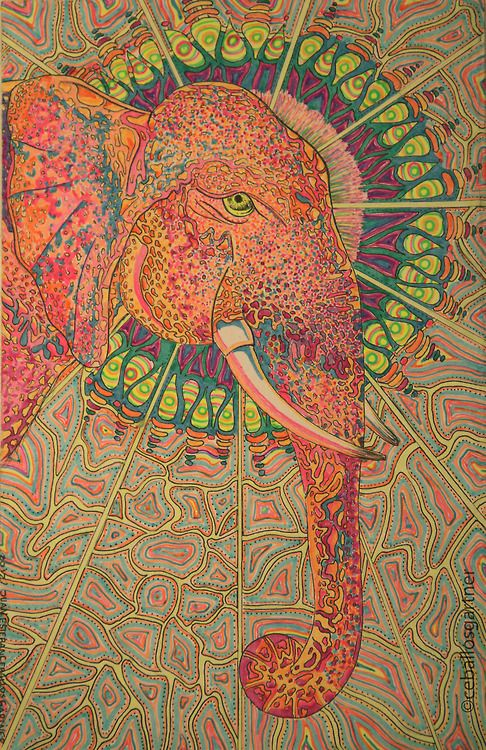 hippie elephant