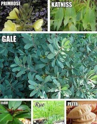 They're all plants....and then there's peeta