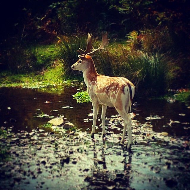 Bradgate Park & Swithland Wood Country Park in Leicester, Leicester
