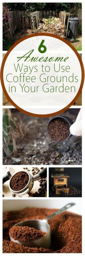 6 Awesome Ways to Use Coffee Grounds in Your Garden