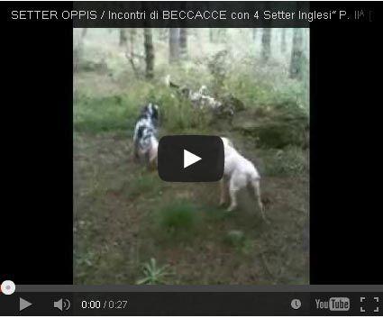 """SETTER OPPIS /Incontri di BECCACCE con 4 Setter Inglesi"""" P. IIᴬ [V_2016-B00952/01]"""