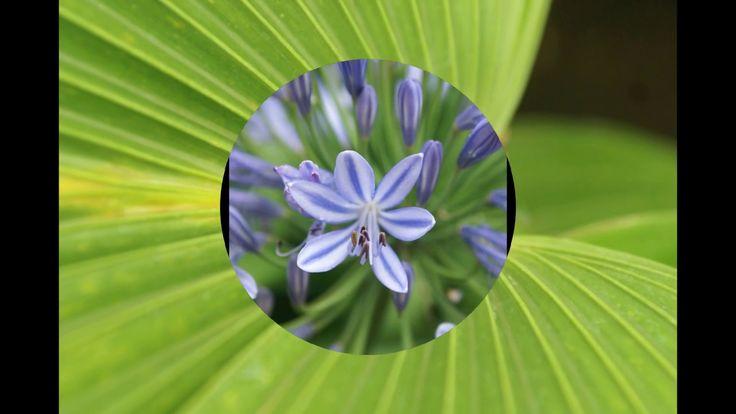Kwiatowe inspiracje do wnętrz- zielony Londyn