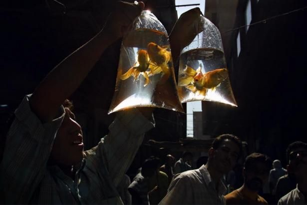 BACK ISSUES: October 2011 Photo: SERGEY MAXIMISHIN Goldfish seller, Baghdad.