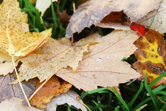 Fall by Pep Talk Polly, via Flickr
