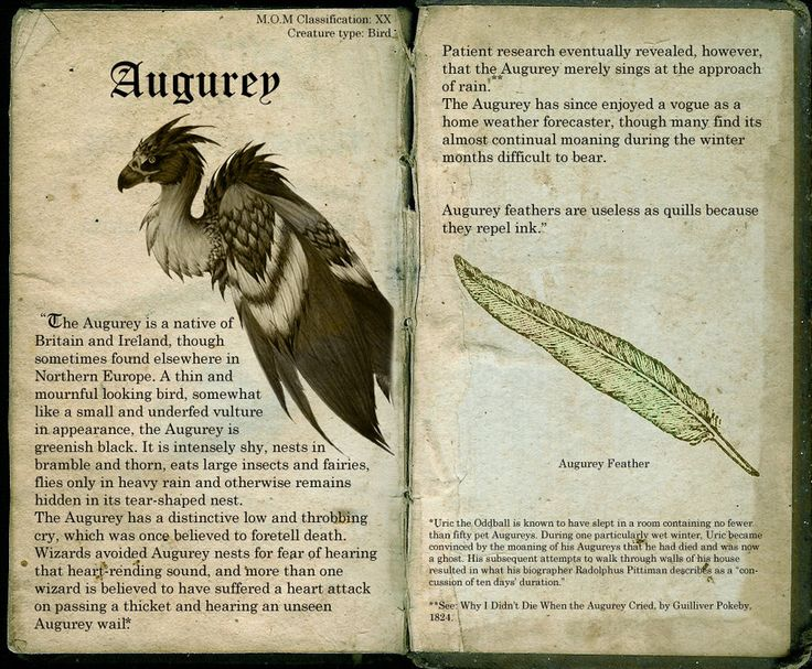 ___________________________ Thanks to: This Augurey has been brought to you by : Verreaux! He has made many drawings of the creatures from the books and I invite you to check out his deviants! They...