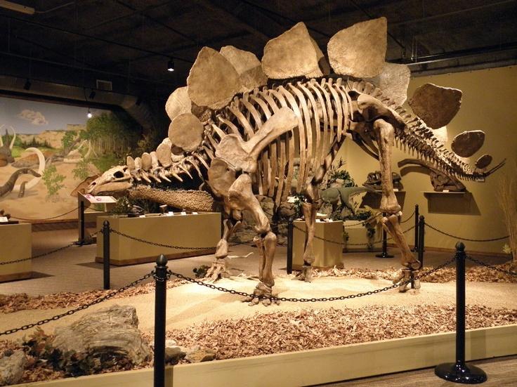 Glendive Dinosaur & Fossil Museum, Glendive, MT