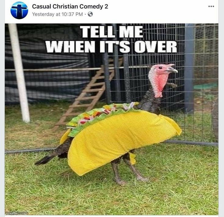 Pin By Ruth Blase On Good Morning Afternoon Night Funny Thanksgiving Taco Tuesday Meme What Do You Meme