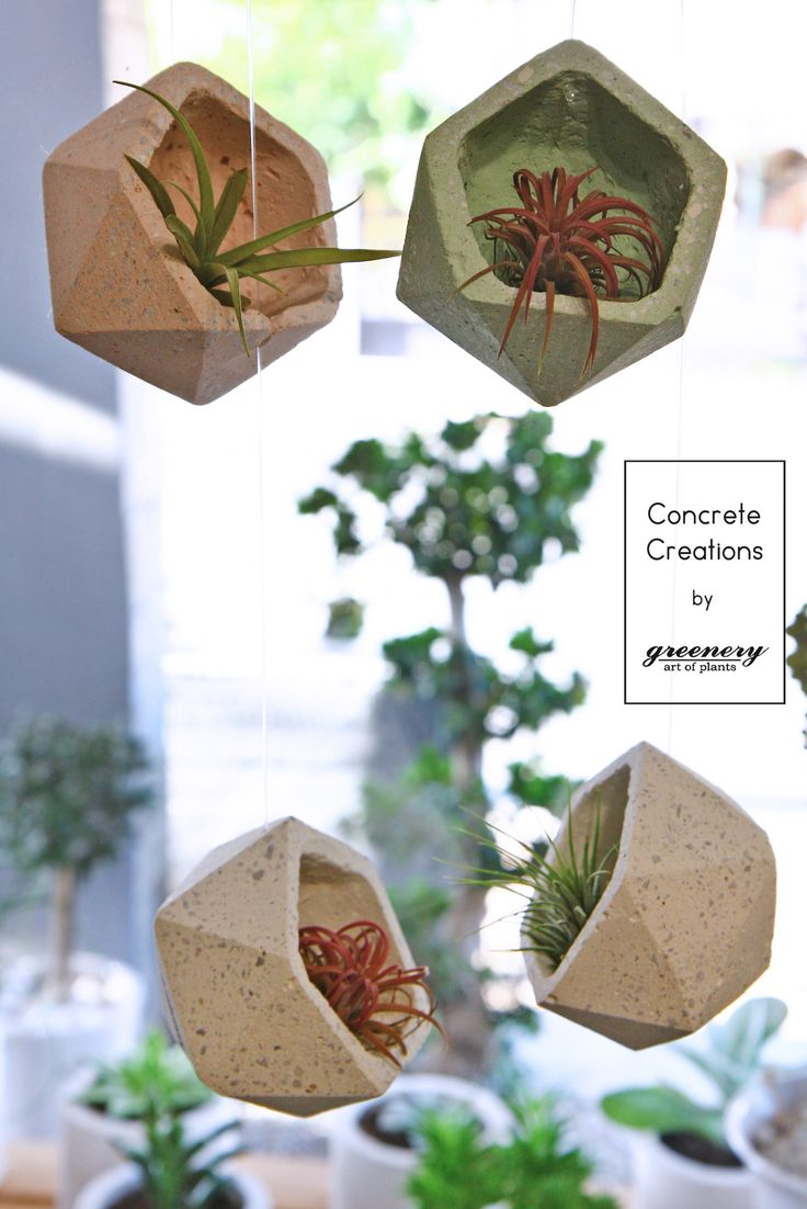 Many ways to decorate it!  Concrete creations by greenery #concrete #concretecreations #pots #greenery #airplants #succulents #cactus #plants #chania #greece