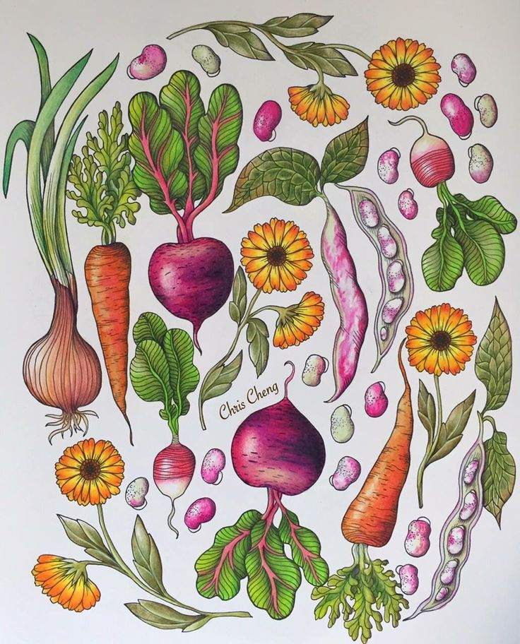 28 Best Maria Trolle Images Adult Coloring Rh Com Eriy Books Suzy Joyner