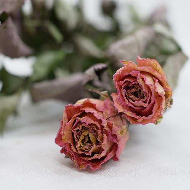 Pfingstrosen Trocknen 131 besten fragile flowers bilder auf schöne blumen