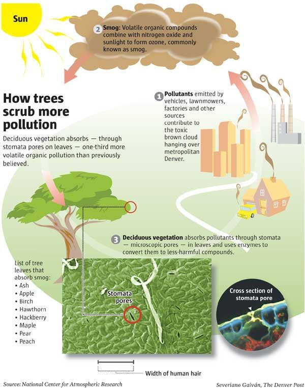 air pollution and plant deciduous trees How trees play role in smog production sciencedaily  endangered plants earth & climate air pollution air quality pollution environmental science.