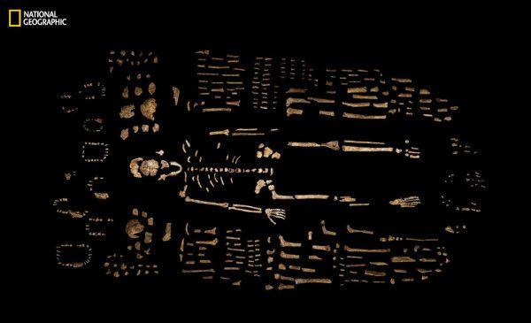 A composite skeleton of H. naledi