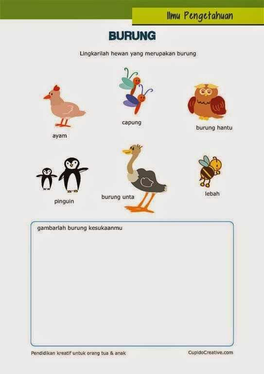 belajar ilmu pengetahuan alam untuk anak kelas 1 SD tentang hewan burung