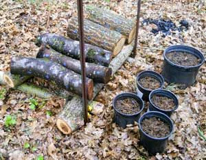 Start Your Own Shiitake Mushroom Logs - Did this with H in an Appalachian Sustainable Development workshop. The only hard thing is waiting a year.