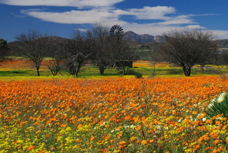 Namaqualand flowers.. ;)