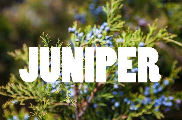 50 Nature Inspired Baby Names Nature Inspired Names Nature Names Nature Girl Names