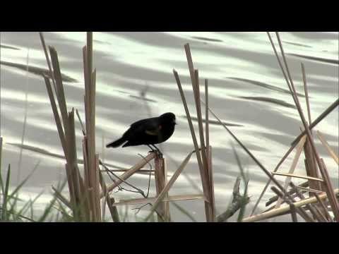 Deep River - Mormon Tabernacle Choir - YouTube