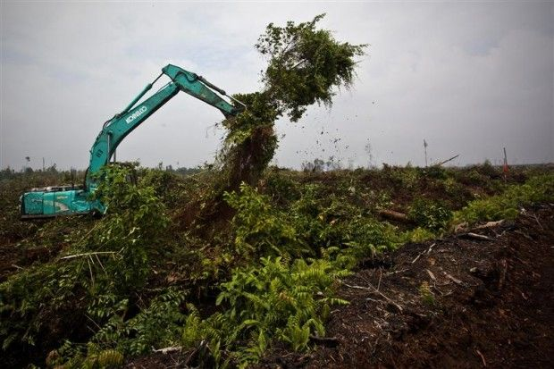 There's nothing sustainable about destroying forests for palm oil | Greenpeace UK