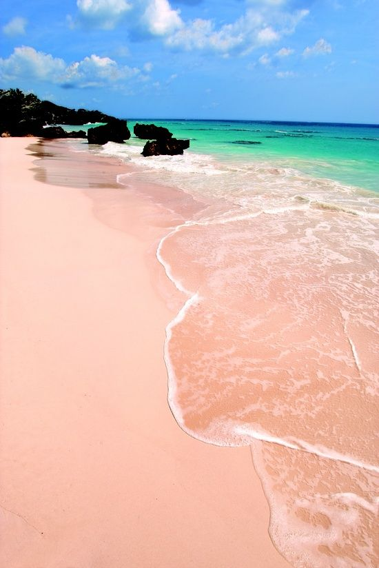Pink Sand Beach (3 miles long), Harbour Island, The Bahamas. Red shelled marine organisms, Foraminifera, grow under the abundance of coral reefs and when they die (when fish knock them loose to feed on them) or they are washed up by the waves, the pink shell then mixes with the sand, causing the pink color.