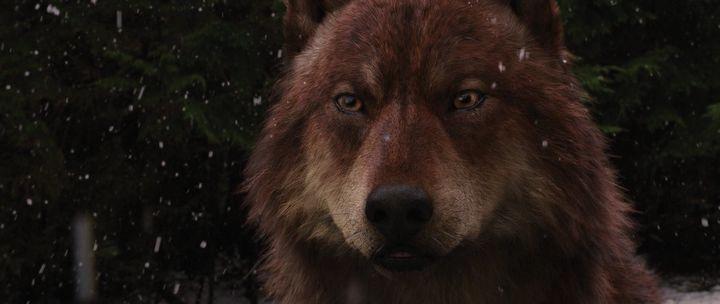 волк джейкоб блэк: 21 тыс изображений найдено в Яндекс.Картинках