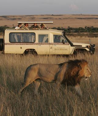 African Safari- We can help you plan a vacation to any destination in the world!