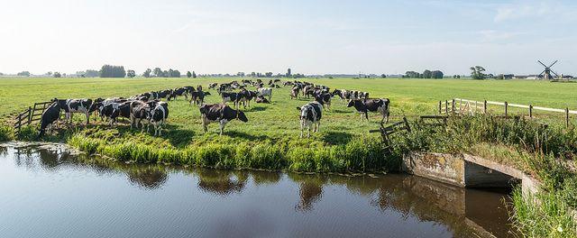 Dutch polder landscape - Hollands polderlandschap by RuudMorijn