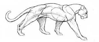 Картинки по запросу анатомия кошачьи лапы нарисованные