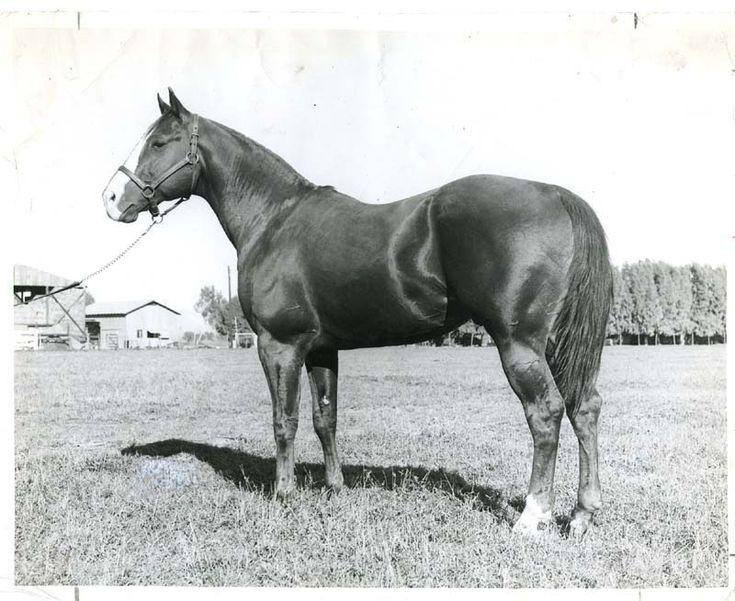 107 Besten Hall Of Fame Horses Bilder Auf Pinterest ...
