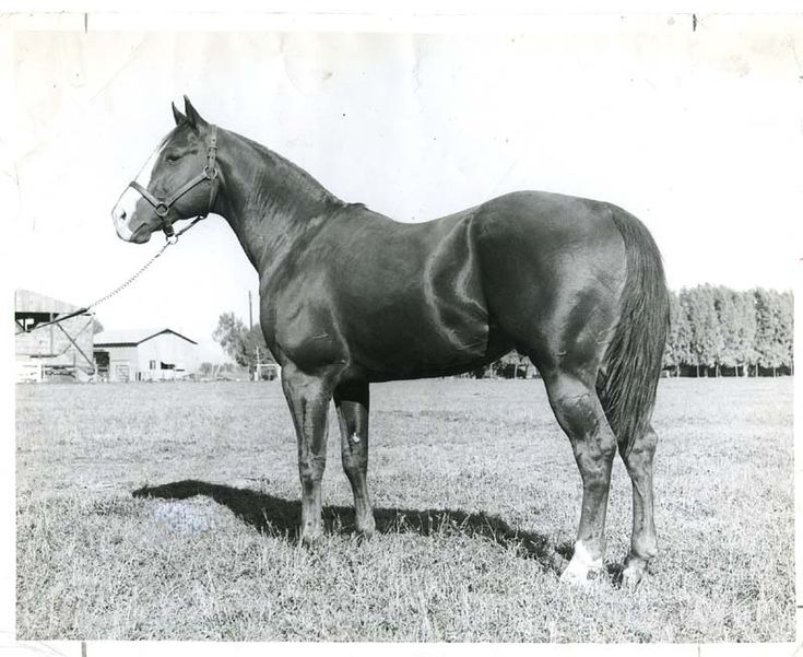 "His name was Texas Dandy, and he was an early crusader for Quarter Horse popularity on the race track, in the breeding world and even in Hollywood. He stared in the 1950 film, ""Boy From India."" Texas Dandy was inducted into the Hall of Fame in 1994. Learn more about the AQHA Hall of Fame inductees at http://aqha.com/en/Foundation/Museum/Hall-of-Fame/Hall-of-Fame-Inductees.aspx"