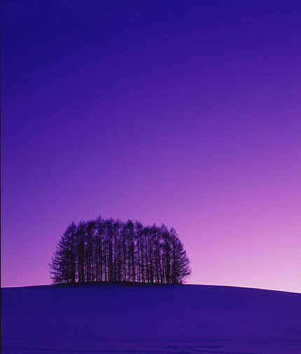美瑛・冬の丘