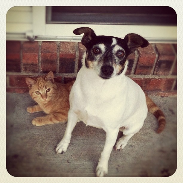 Teaching dogs to get along with cats. Dogs and cats living ...