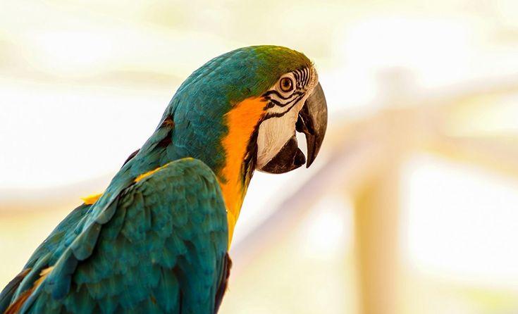 67 best parrots images