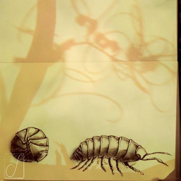 #unabellagiornata 294/365  #inktober2017 giorno 22 Armadillidium vulgare - Viene talvolta considerato un insetto ma è un crostaceo che prende il nome da un mammifero e ha svariati soprannomi...porcellino di terra, onisco, pirigungia, verme cocolo, caramattino, baddottola, nonnina…non c'è da stupirsi se talvolta si chiude in sé stesso in preda a crisi d'identità! #inktober  #inktoberaduntratto #passoasei #insetti  #sketchbook #shadow #armadillobug