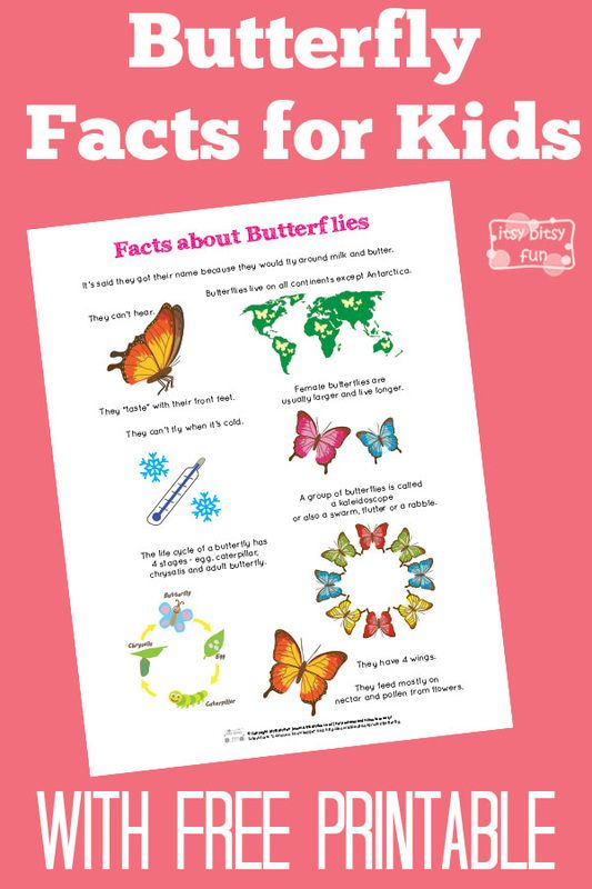 Fun Butterfly Facts for Kids With Free Printables