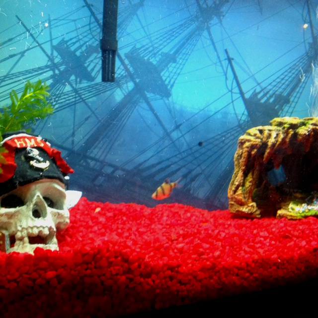 Pirate themed fish tank fish turtles pinterest the o for Fish tank pirate ship