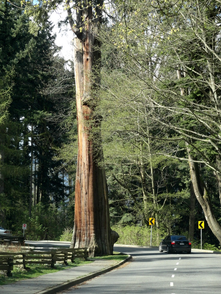 driving through Stanley Park - Vancouver photo/lucie