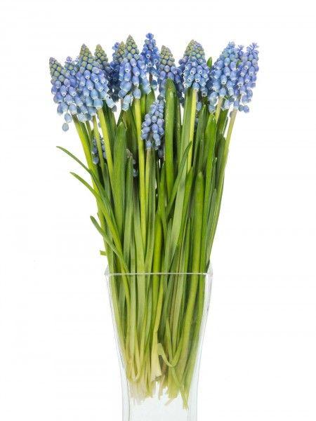 ber ideen zu blaue hochzeitsblumen auf pinterest. Black Bedroom Furniture Sets. Home Design Ideas