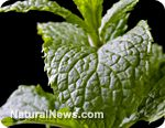 Ward off cancer, protect against radiation, and ease irritable bowel syndrome with mint