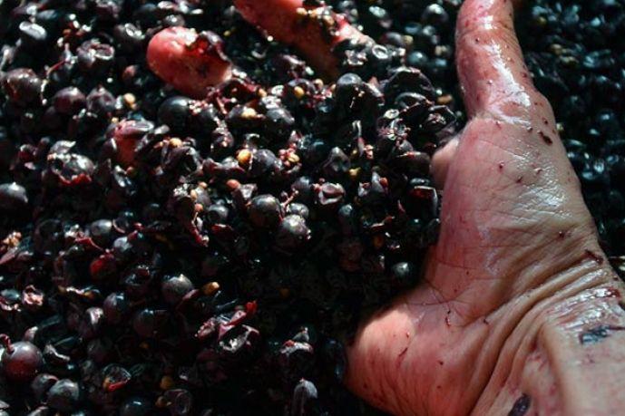 I vini di Podere Còncori in Garfagnana http://www.viedelgusto.it/component/k2/item/2708-il-gusto-della-garfagnana-nei-vini-biodinamici-di-podere-concori.html