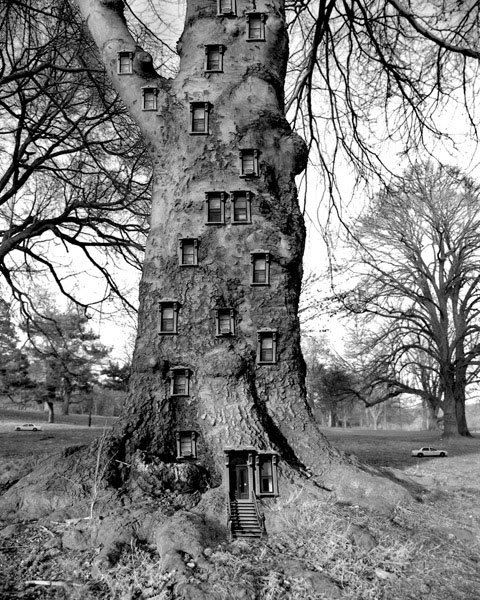 If a tree represents the integrated self & a house represents the mansion of the soul - then maybe this could be interpreted as all levels of the psyche being in tune?