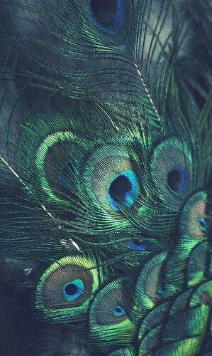 Peacock wallpaper!