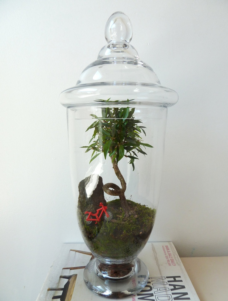 26 Best Glass Terrarium Collections Images On Pinterest Terrariums Glass Terrarium And Terraria